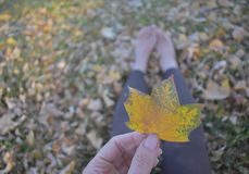 Barefoot woman walking in leaves. Woman walking bare feet in the Autumn leaves that are changing colors feet only Stock Photos