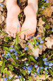 Barefooted tender woman's feet in spring flowers. Copy space royalty free stock image