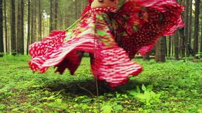 Barefooted woman in a bright gypsy attire dances in the forest. Close-up stock footage
