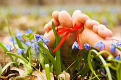 Barefooted Woman S Feet In Flowers. Ribbon Bow Royalty Free Stock Image