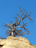 Barely Hanging On. Juniper growing out of rock in the badlands of the Southwest stock images