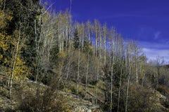 Baren drzewa Obraz Stock