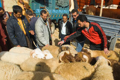 Bargaining for a sheep for the sacrifice of Eid al. Haggling for a sheep to sacrifice for Eid al-Adha in the sheep souk (market) in Fez, Morocco Royalty Free Stock Photos
