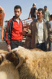 Bargaining for a sheep for the sacrifice of Eid al. Haggling for a sheep to sacrifice for Eid al-Adha in the sheep souk (market) in Fez, Morocco Royalty Free Stock Photography