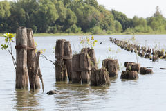 Barge pillings on Arkansas River. S back waters shallow cove royalty free stock image