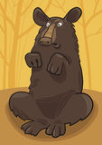 Baribal American black bear Royalty Free Stock Image