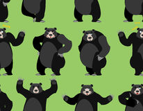 Baribal seamless pattern. American black bear ornament. Set a wi Stock Photo