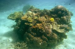 bariery wielki rafowy sceny underwater fotografia stock