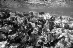 bariery wielki rafowy sceny underwater obraz royalty free