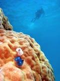 bariery wielki rafowy sceny underwater zdjęcia royalty free