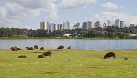 Barigui-Park Lizenzfreies Stockfoto