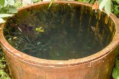 Baril en bois rempli avec de l'eau Photos libres de droits