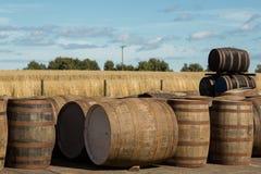 Barilotti del whiskey immagine stock
