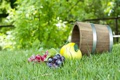 Barilotti 2 della quercia e dell'uva Fotografia Stock