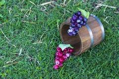 Barilotti della quercia e dell'uva Fotografie Stock Libere da Diritti