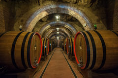 Barilotti di vino (botti) in una cantina di Montepulciano, Toscana Fotografie Stock Libere da Diritti