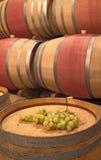 Barilotti di vino ed acini d'uva Fotografia Stock