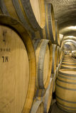 Barilotti di vino nella cantina per vini Fotografia Stock