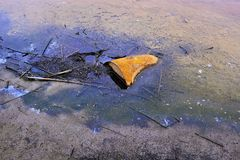 Barilotto arrugginito del metallo parzialmente che sporge dalla terra paludosa con i resti dei prodotti petroliferi Fotografie Stock