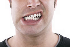 Baring teeth Royalty Free Stock Photo
