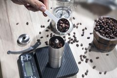 Baristas pour roasted coffee beans into a manual grinding machine for coffee beans royalty free stock images