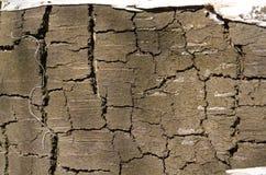 bark Árvore Casca de madeira Camada superior removida do vidoeiro r Textura de madeira fotografia de stock