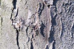 bark Árvore Casca de madeira E nave r Textura de madeira Texturas naturais fotos de stock