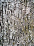 Bark. Tree bark texture Stock Image