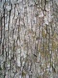Bark. Tree bark texture stock image