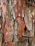 Bark 1. Close-up of the bark of a tree with pieces of wood flaking off Royalty Free Stock Photo