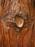 Bark. Macro photo of tree bark texture background Royalty Free Stock Photos