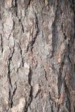 Bark Stock Photos