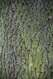 Bark. Close up of tree bark Stock Photography