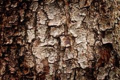 Bark. Tree bark texture, take from tamarind tree stock photos