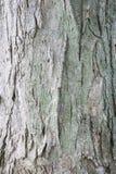 Bark. Tree bark stock photography