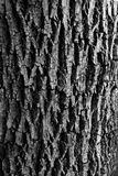 Bark Stock Photo