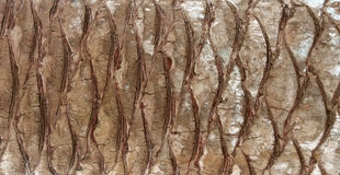 Bark. Palm bark Royalty Free Stock Photos