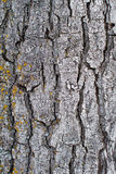 Bark Royalty Free Stock Photo