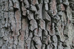Bark. Close view on tree bark Royalty Free Stock Photos