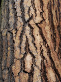 Bark. Detail view of bark texture on aged pine tree stock image