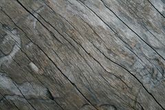 Bark. Close-up of a dead tree Royalty Free Stock Image
