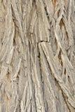 Bark. The background of scholar tree bark Royalty Free Stock Photos