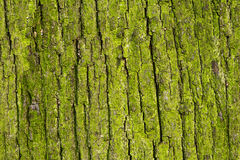 Bark Royalty Free Stock Image
