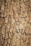 Bark Stock Photos