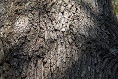 bark Foto de Stock Royalty Free