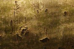 Bark. Tree's bark Royalty Free Stock Photos