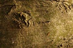 Bark. Tree's bark Stock Photo