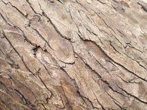 bark Imagens de Stock Royalty Free