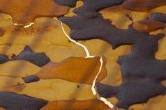 Bark. Spotty Bark texture Stock Photo