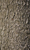 Bark. Backgound Texture Stock Images